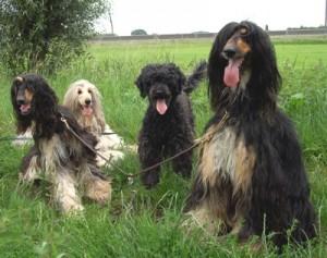 onzehonden